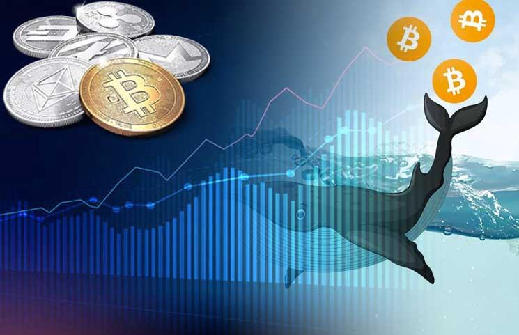 Bitcoin bálnák I Cryptofalka