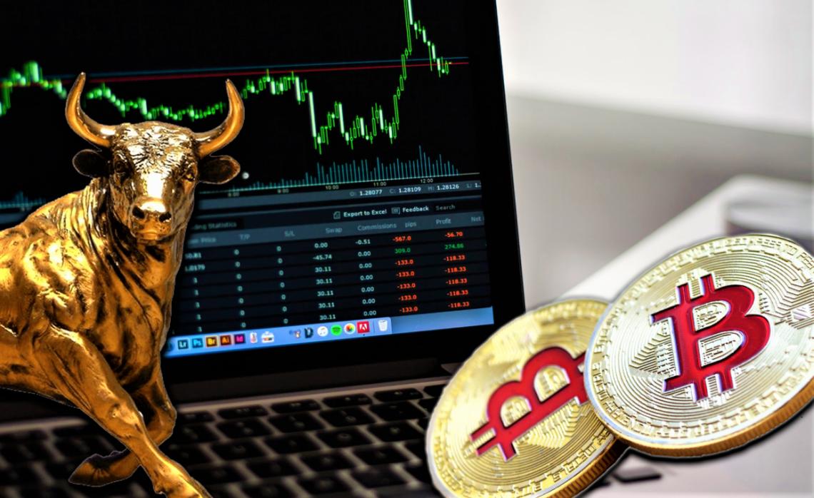 Bitcoin bull I Cryptofalka