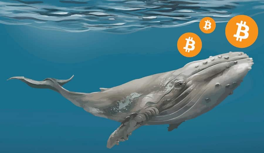 digitális óceán bitcoin hogyan kell letétbe helyezni a btc cryptopia-t