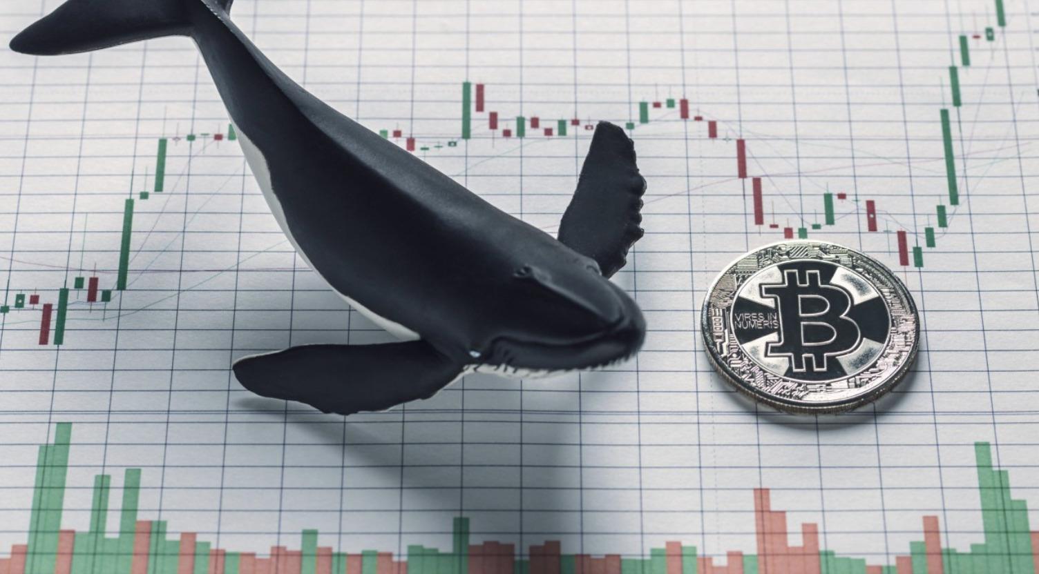 Bitcoin bálna I Cryptofalka