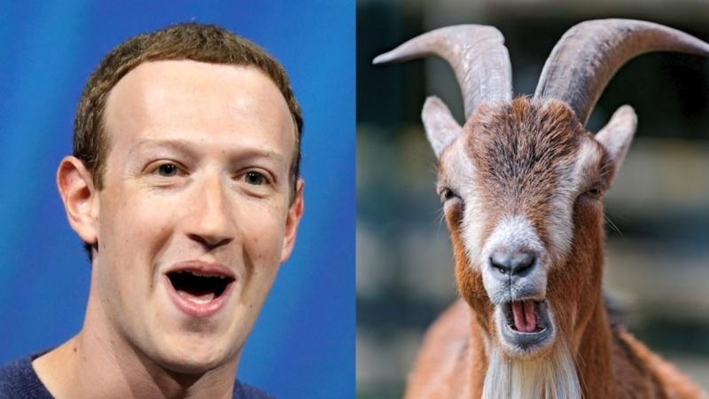 Mi köze Zuckerberg kecskéinek a bitcoin árfolyamához?