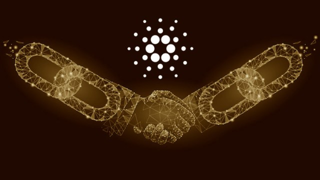 Cardano okos szerződés I Cryptofalka