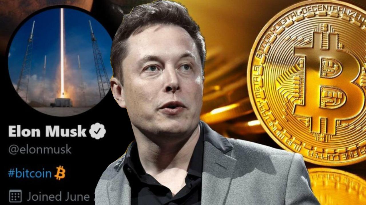 Elon Musk I Cryptofalka